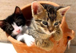 Chat, Chats, chatons, chaton, minou, minous