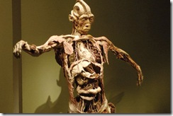 bodies-l-exposition-corps-humains-exposes