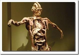 bodies-l-exposition-corps-humains-exposes-premiere-exhibit